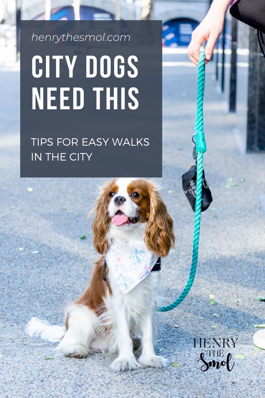 5 City Dog Walk Essentials