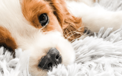 Signs You're Ready to Become a Dog Parent