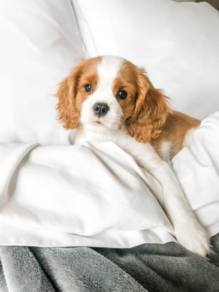 overcoming puppyhood struggles