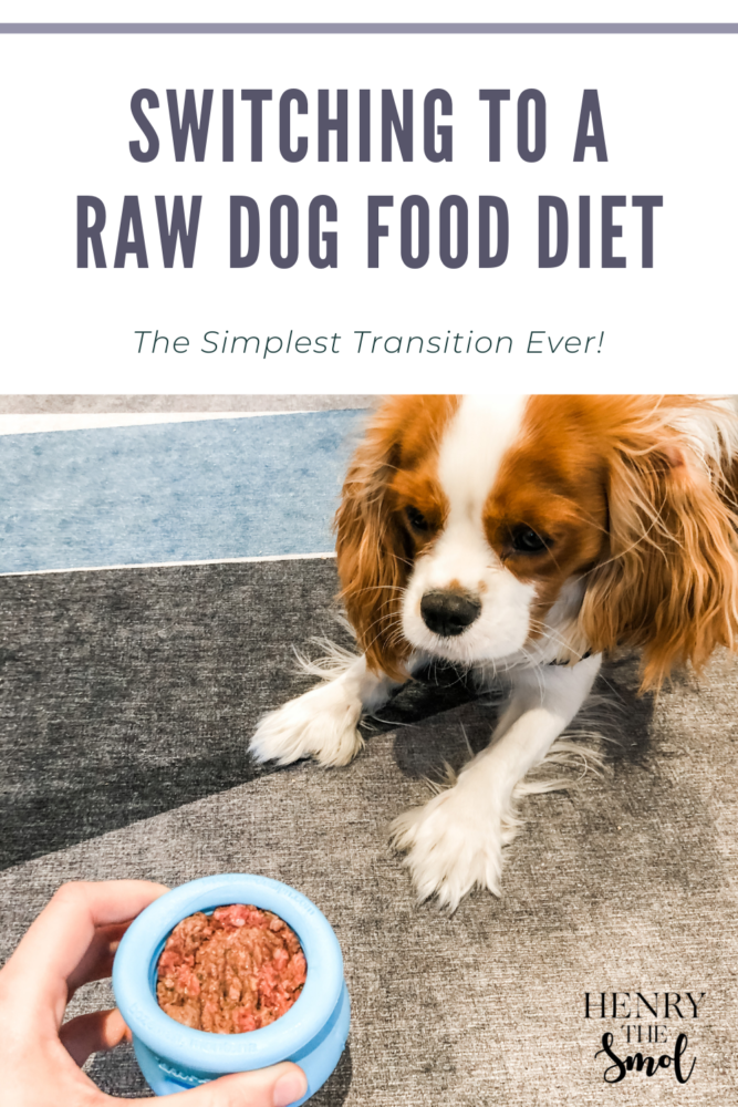 Transitioning to a Raw Dog Food Diet