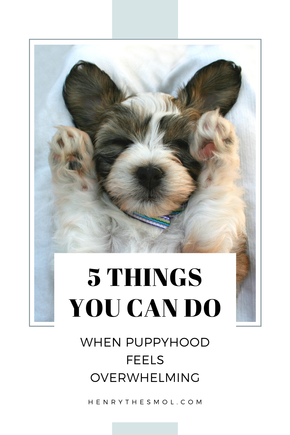 5 Tips For Overcoming Puppyhood Struggles