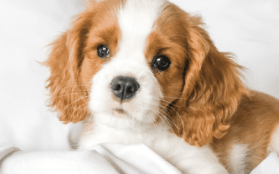 Puppyhood Struggles: Getting Through The Tough Days