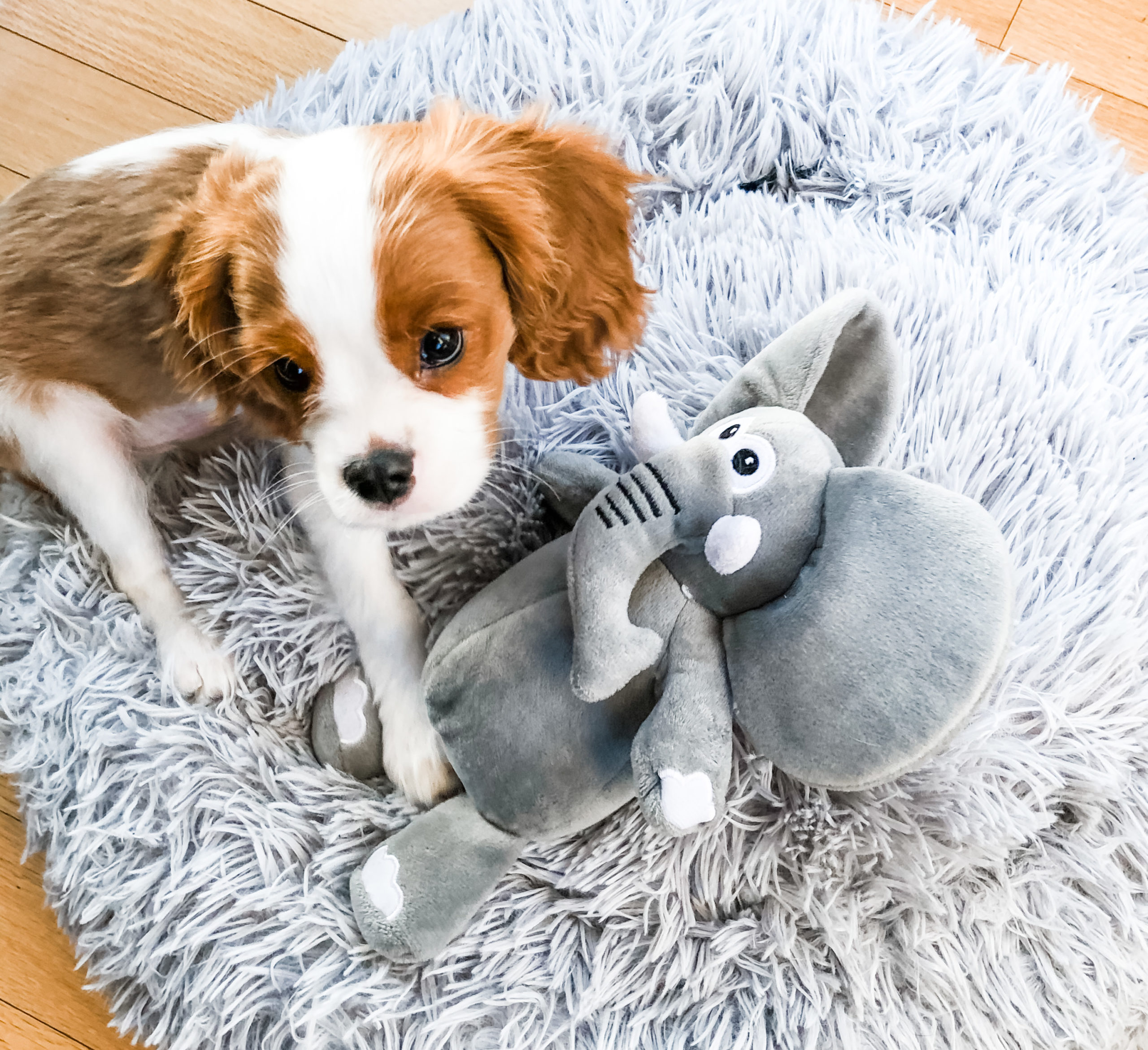 Dog on Bed with Elephant