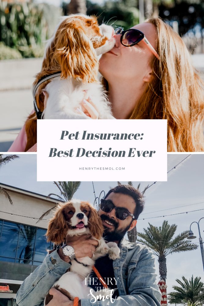 Pet Insurance: BEST Decision Ever!