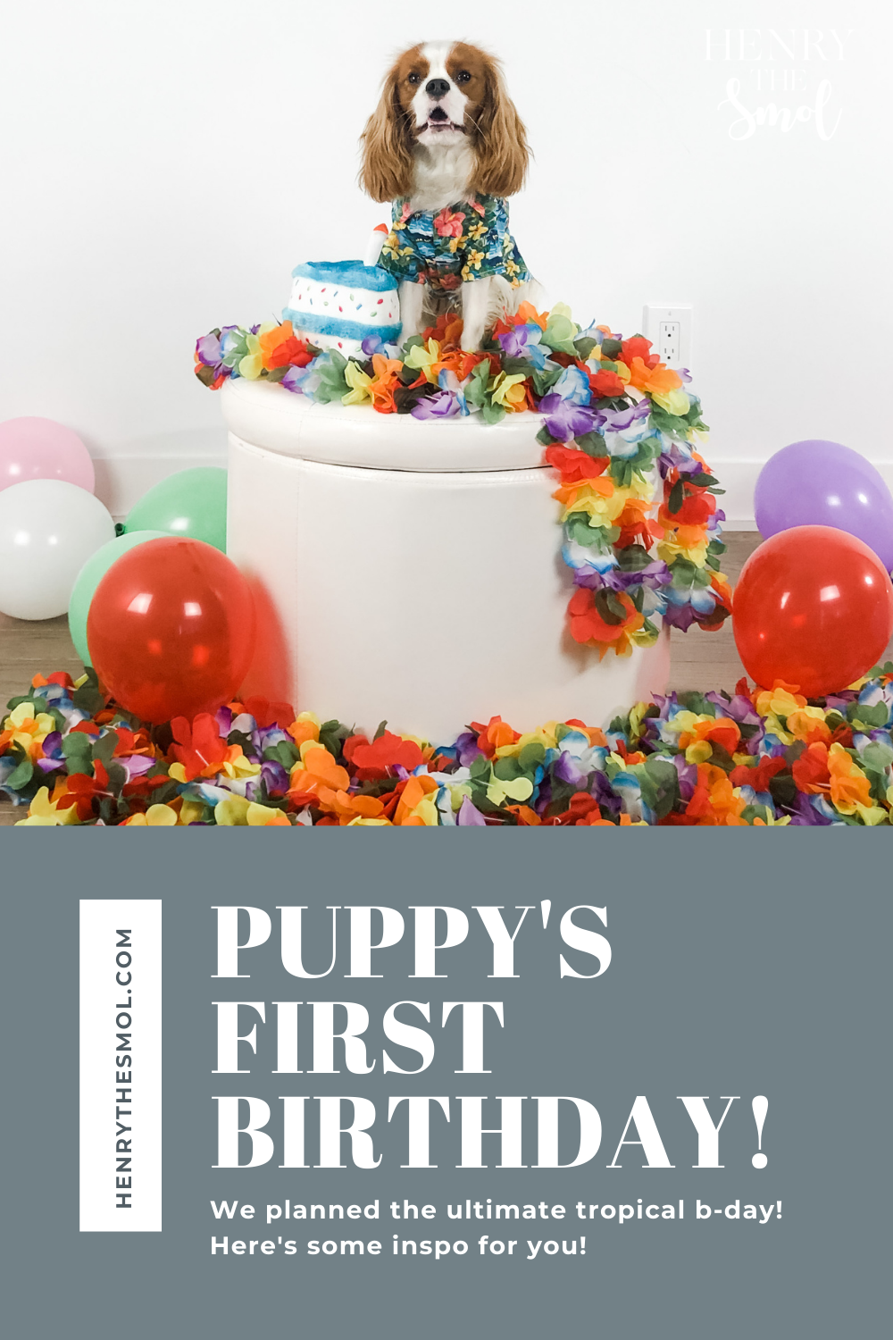 How to Throw a Birthday Party For Your Dog