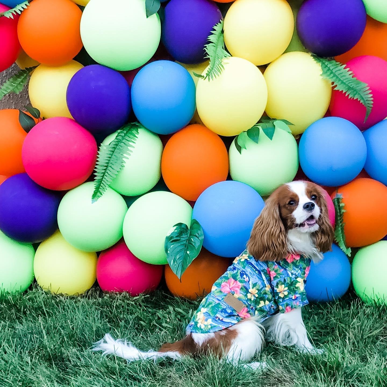 Dog and Balloons