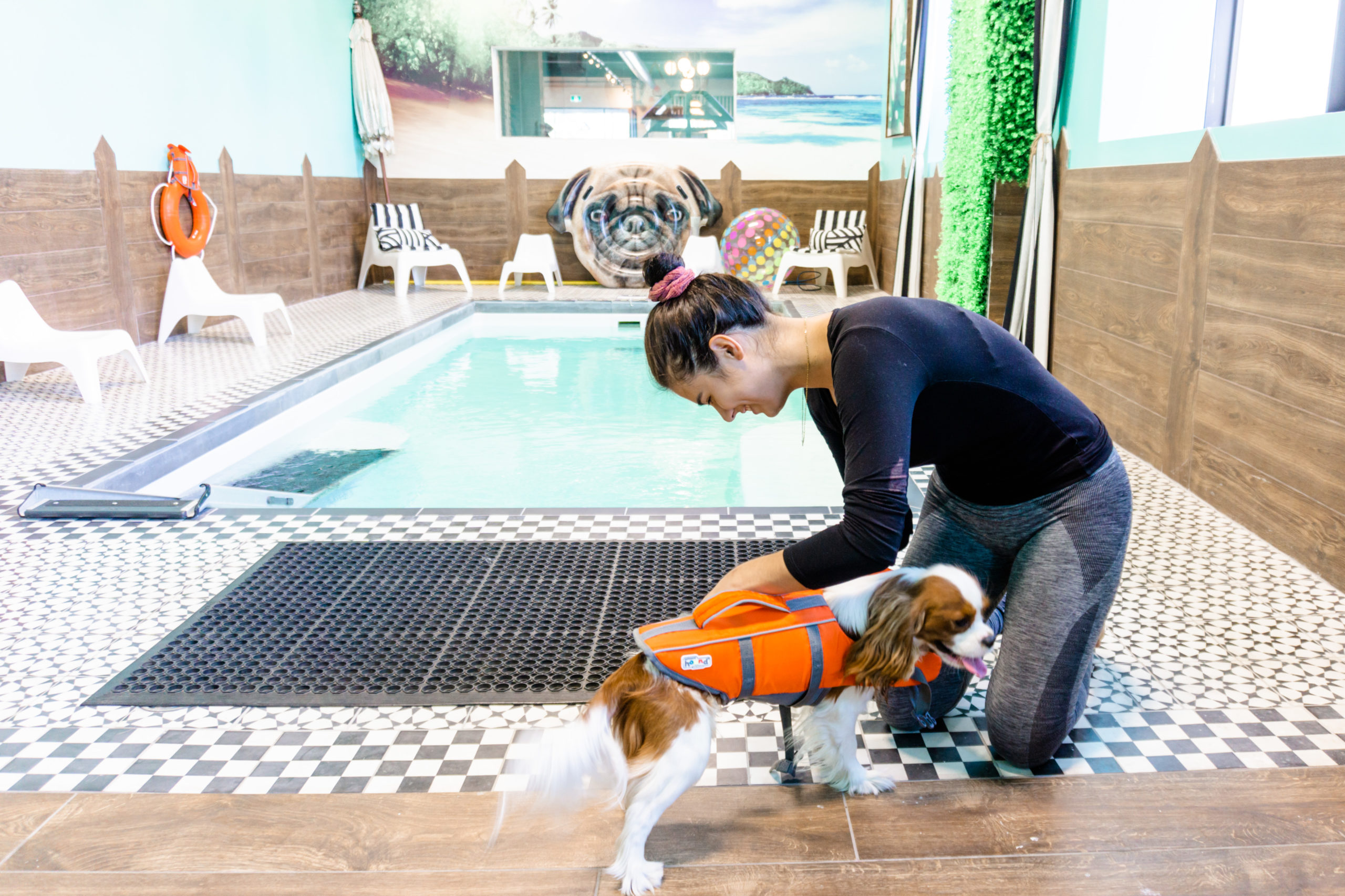 Dog with life vest near swimming pool