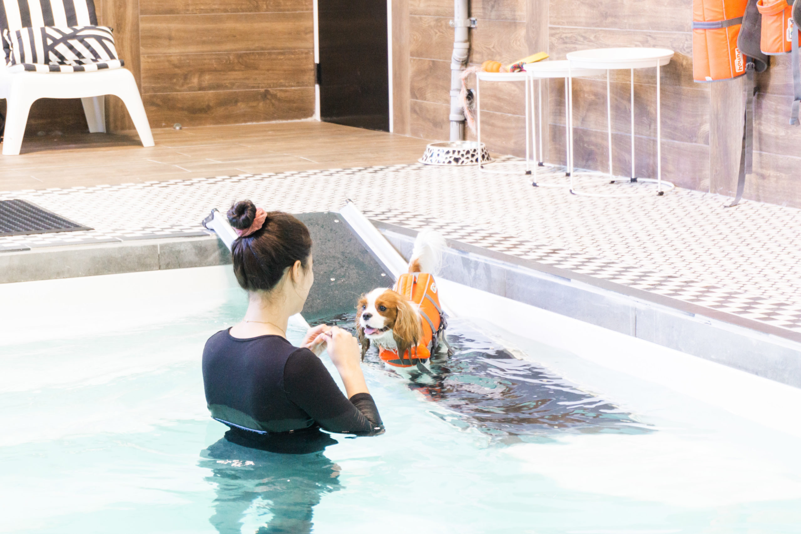 Dog swimming with trainer