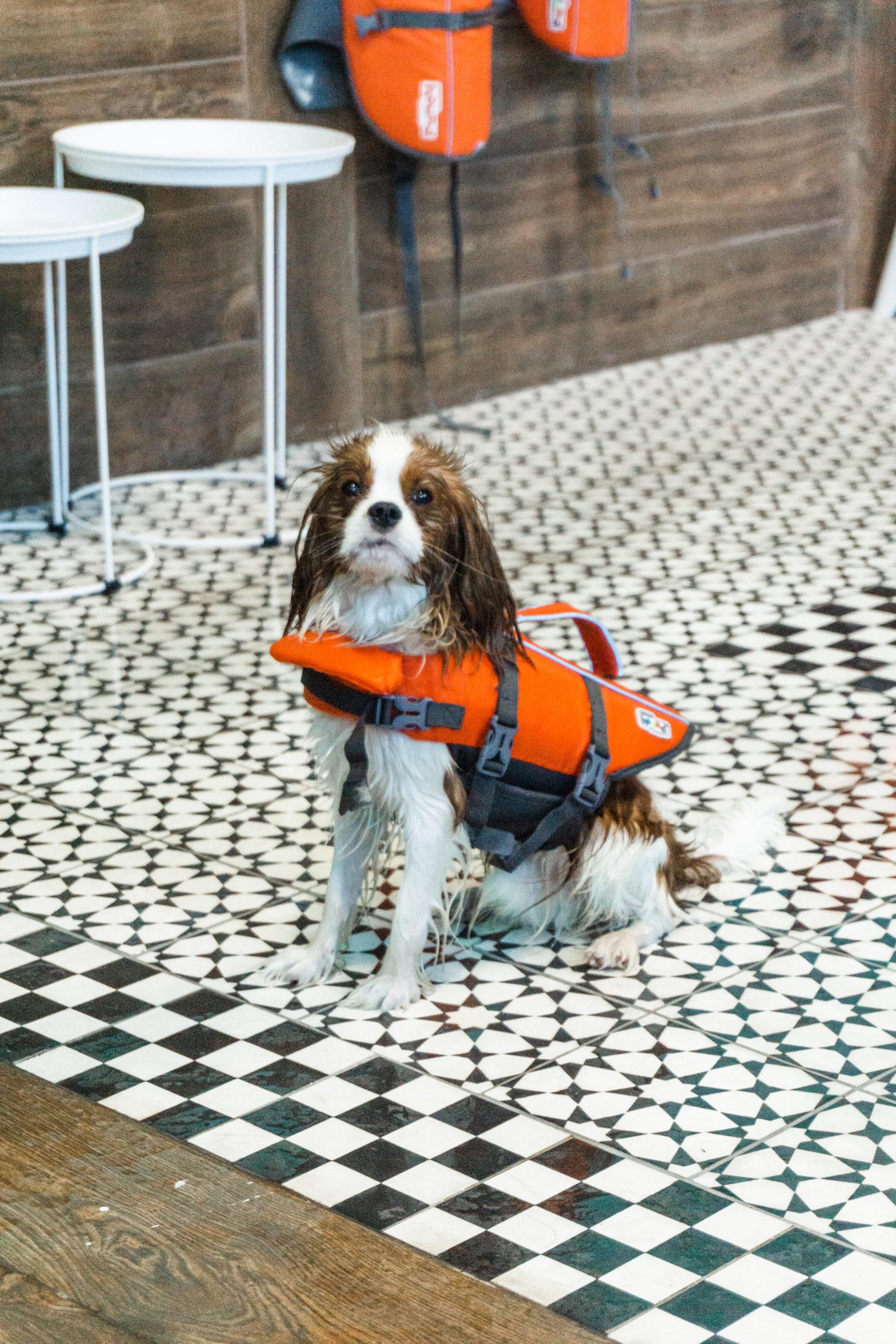 wet dog wearing life vest