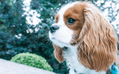 How To Grow Your Dog's Instagram Account