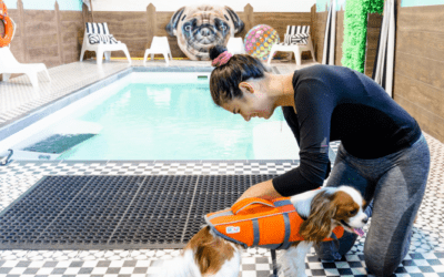 A Day at a Luxury Dog Resort: Doggieville is Every Pup's Dream
