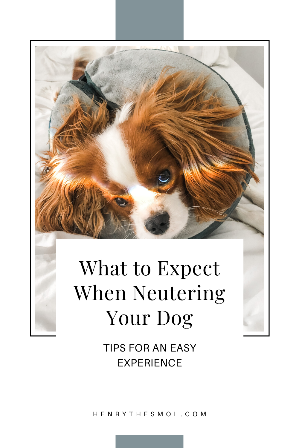 What to Expect When Neutering Your Dog