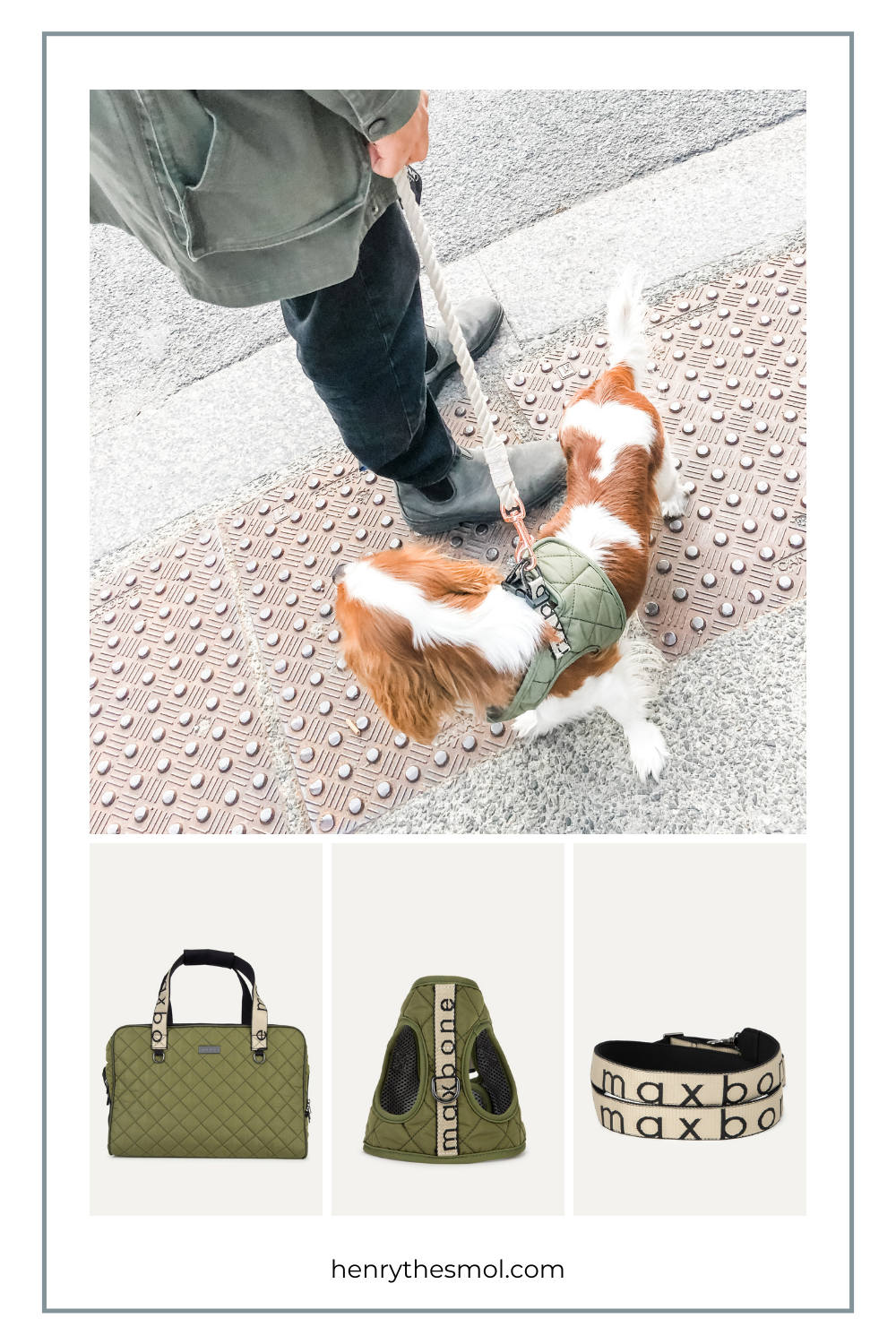 The Maxbone City Carrier For On-The-Go Dog Moms