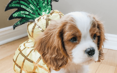 The Ultimate Amazon Dog Costume List: 30 Under 30$