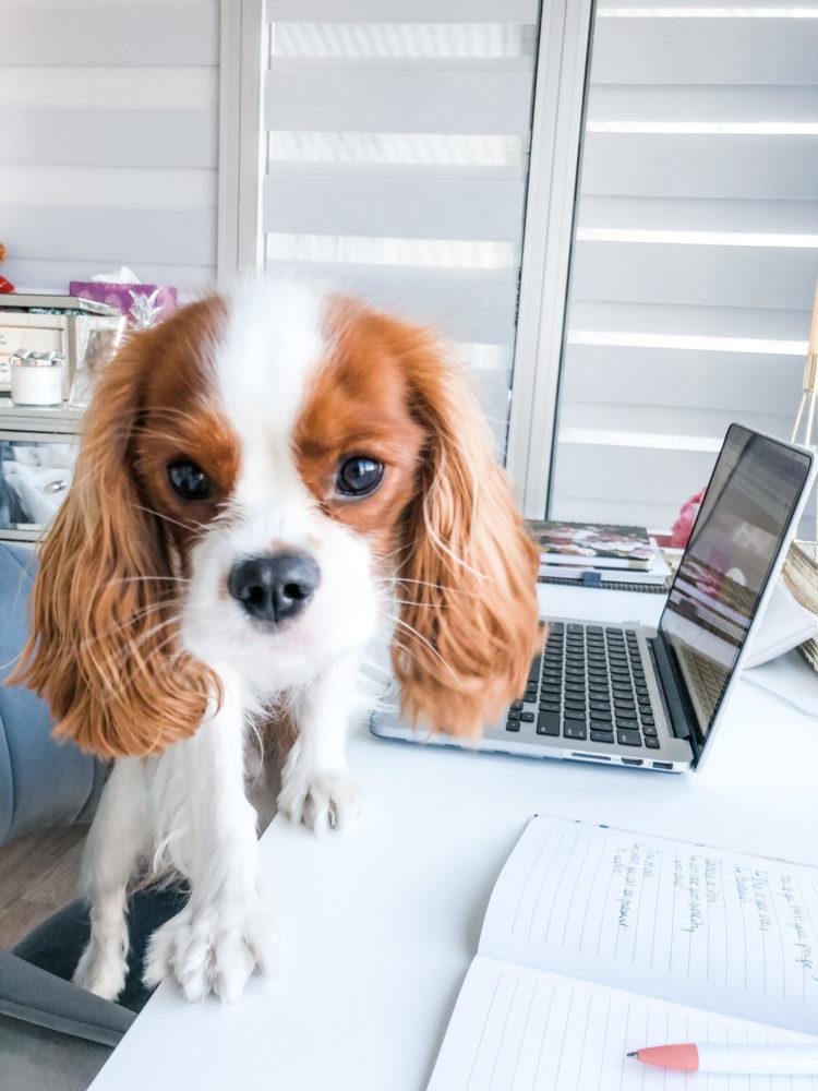 City Dog Living: A Pet Lifestyle Blog