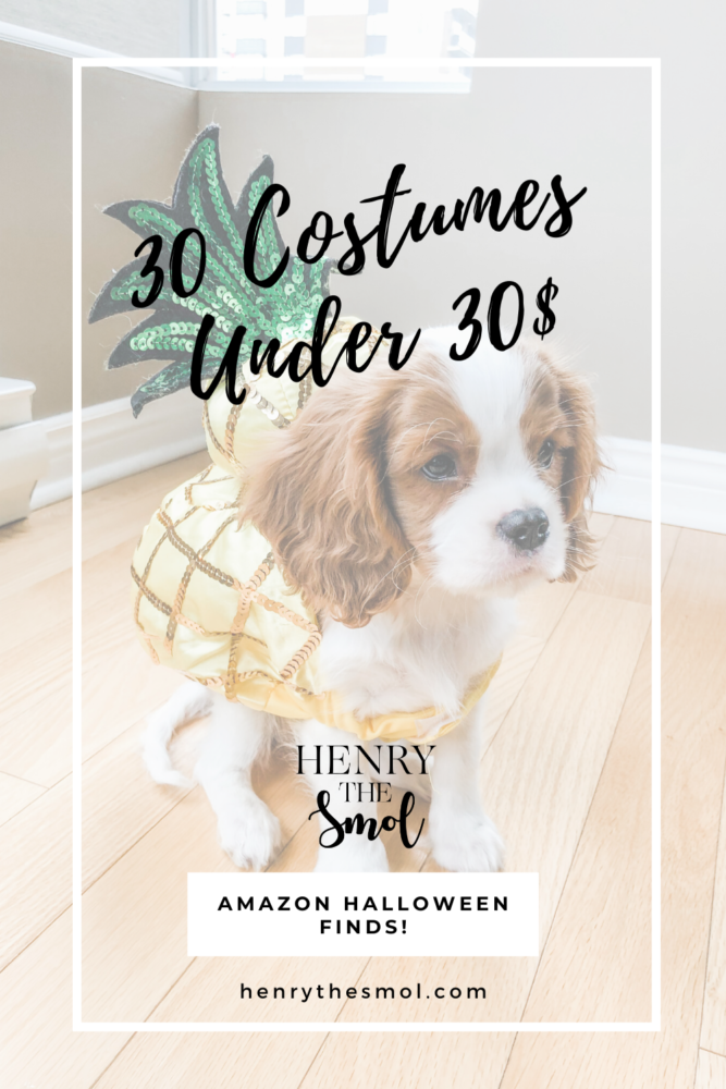 The Ultimate Amazon Dog Costume List: 30 Under 30$