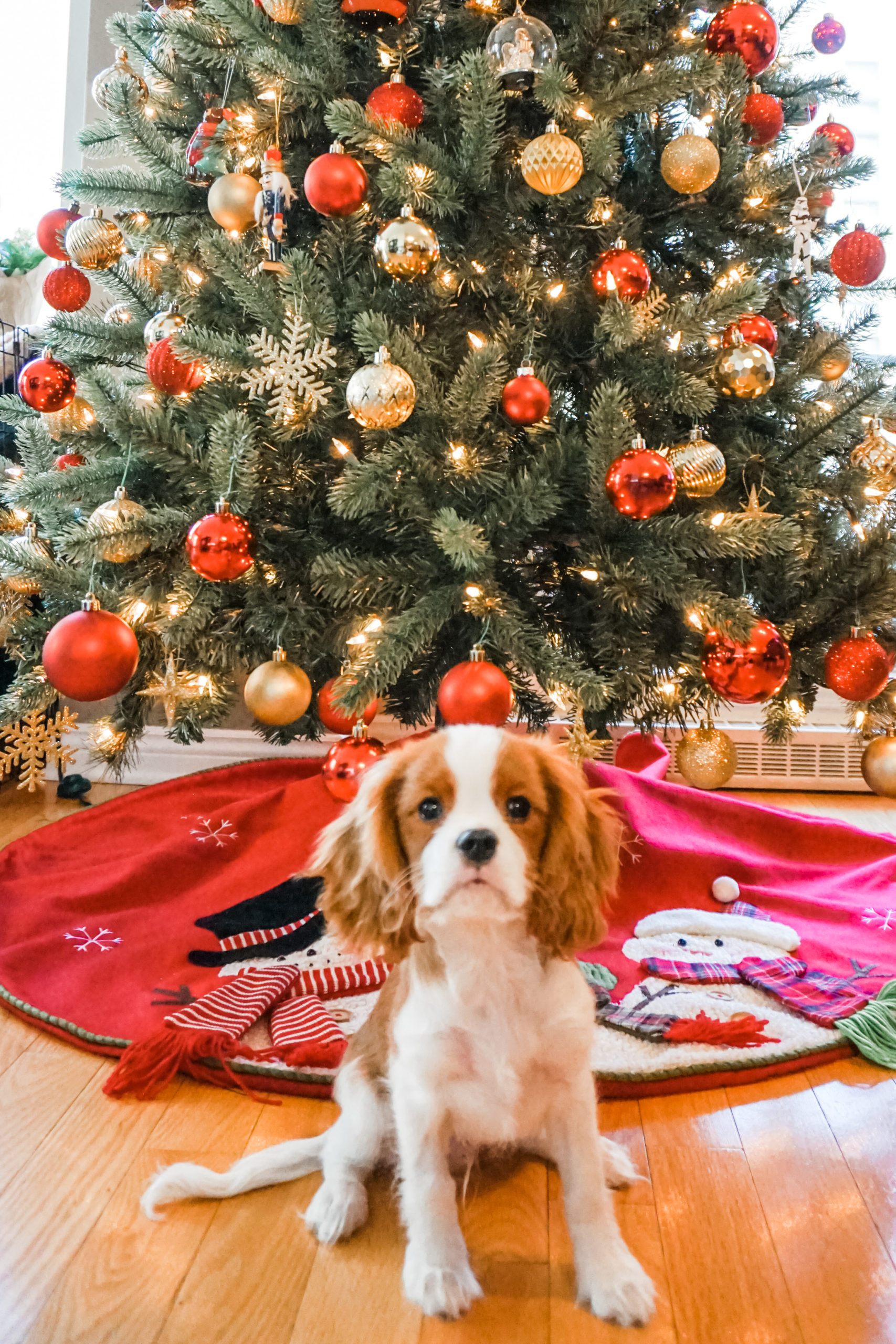 Gift Guide For The Dog Lover