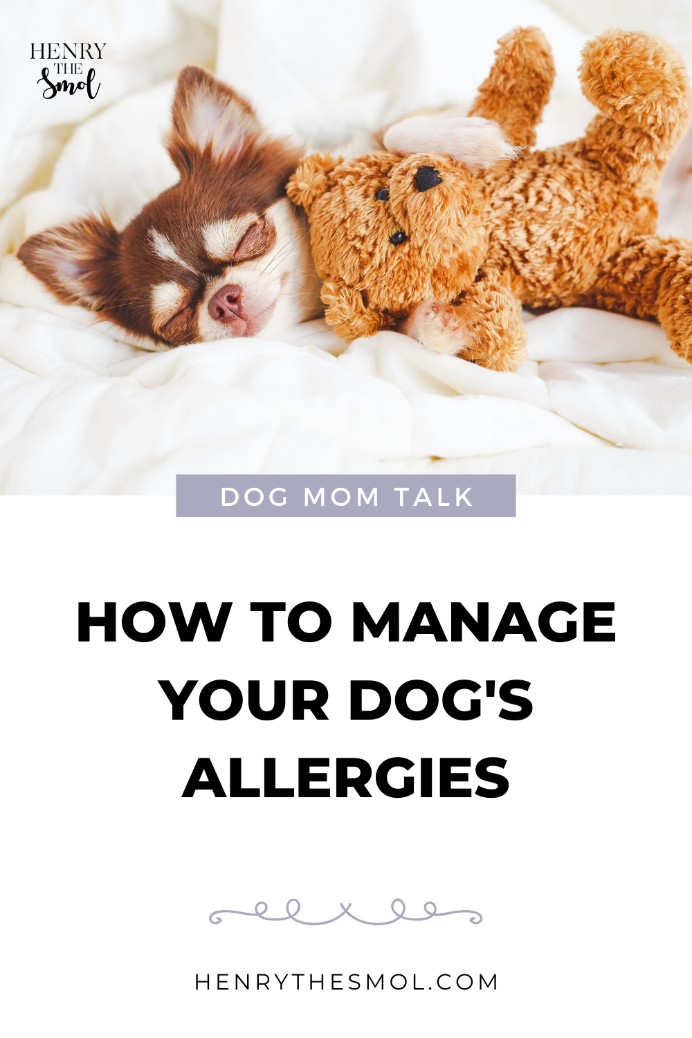 Dog Mom Talk: Dogs & Allergies with Shed Happens