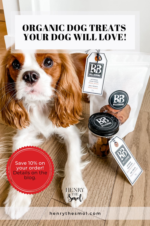 Smol\'s Closet: Billiebone Dog Treats & Accessories