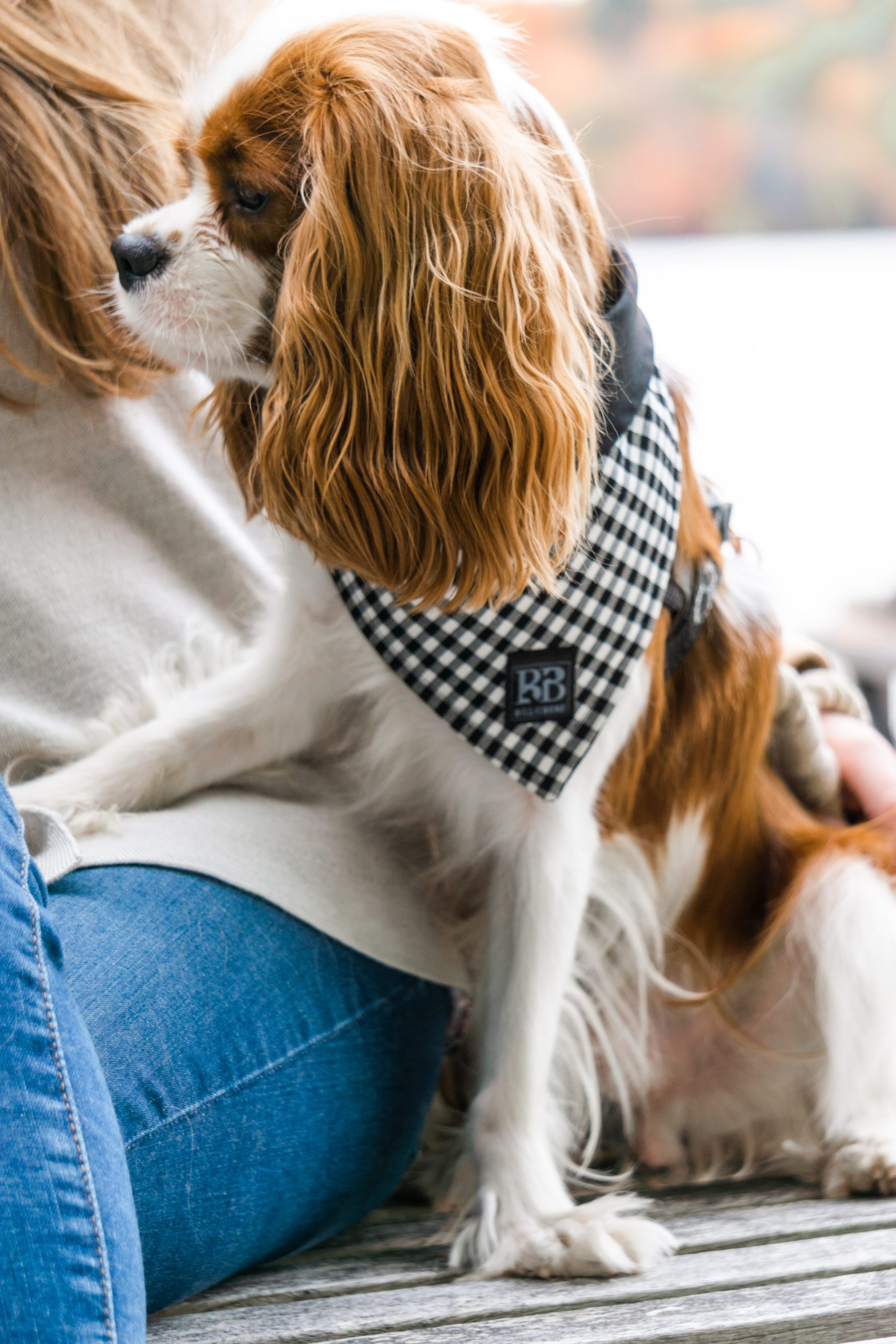 Smol's Closet: Billiebone Dog treats & accessories