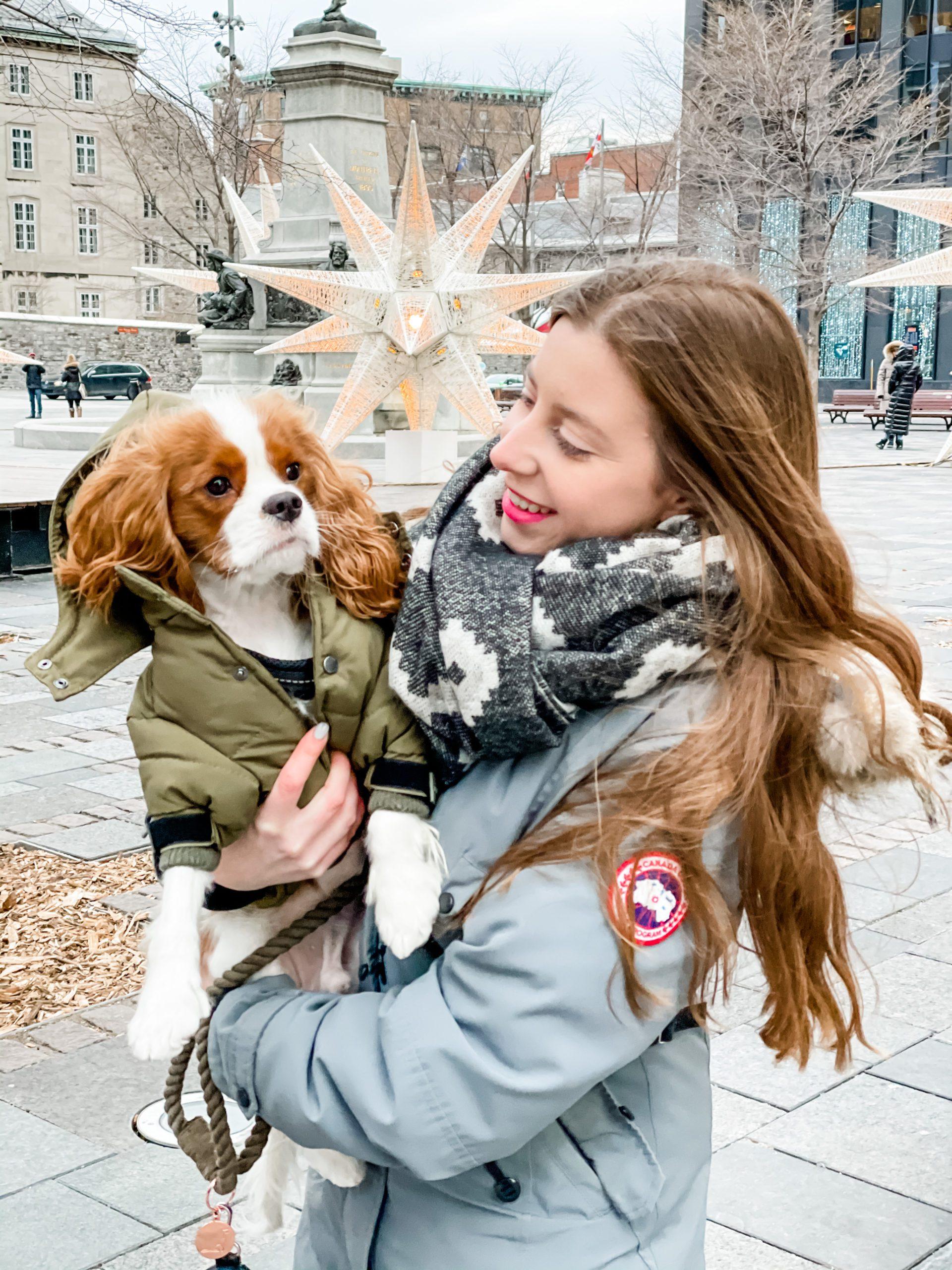 Winter Dog Essentials