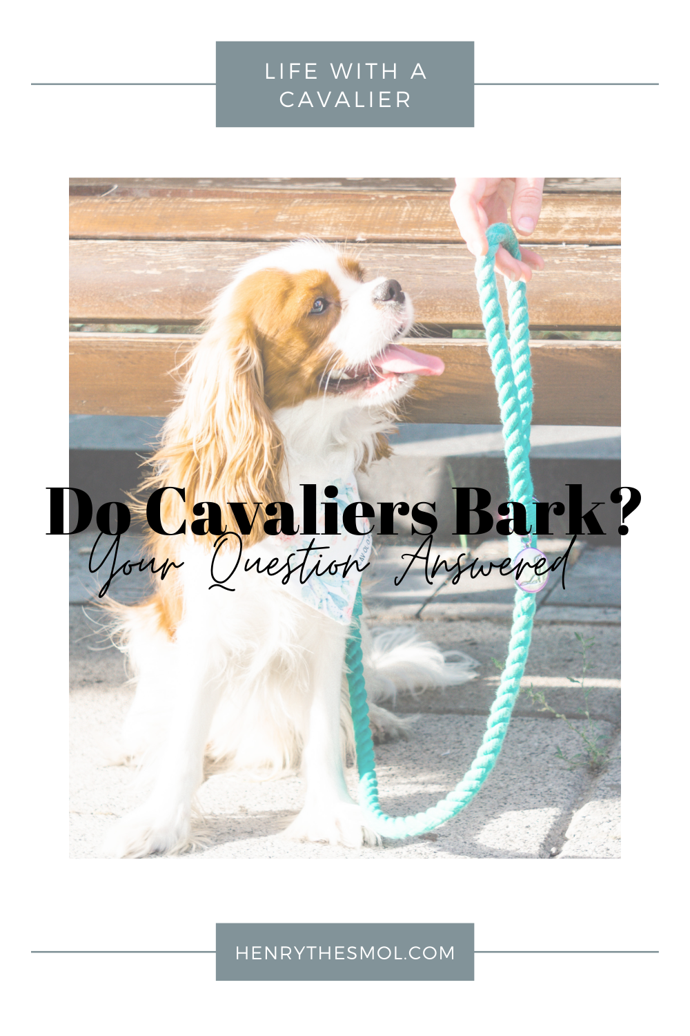 Do Cavaliers Bark? Tips For Quieting Anxious Barking