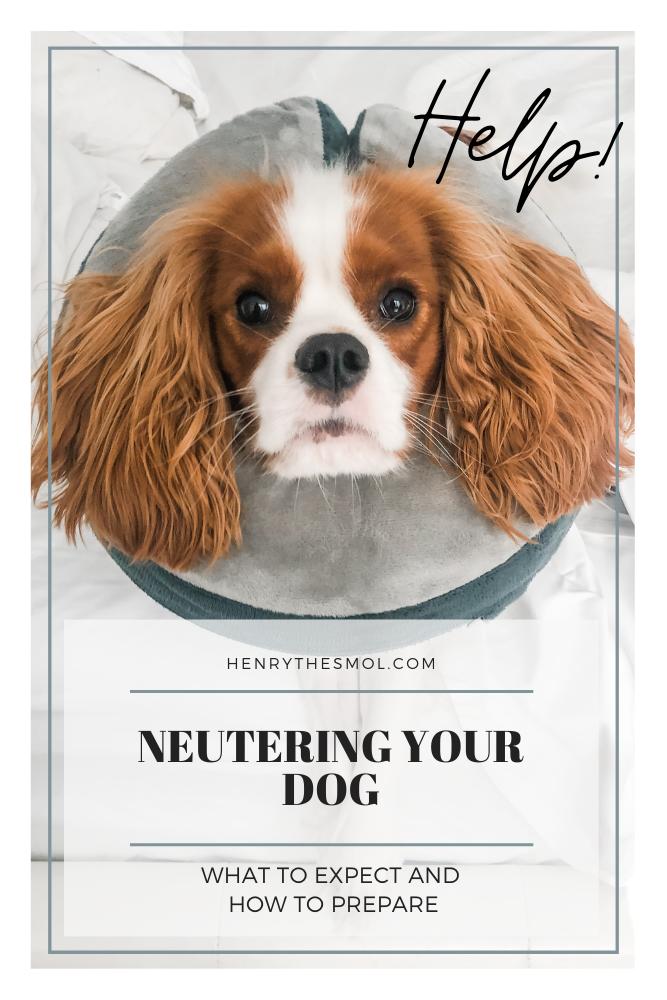 Neutering Your Dog