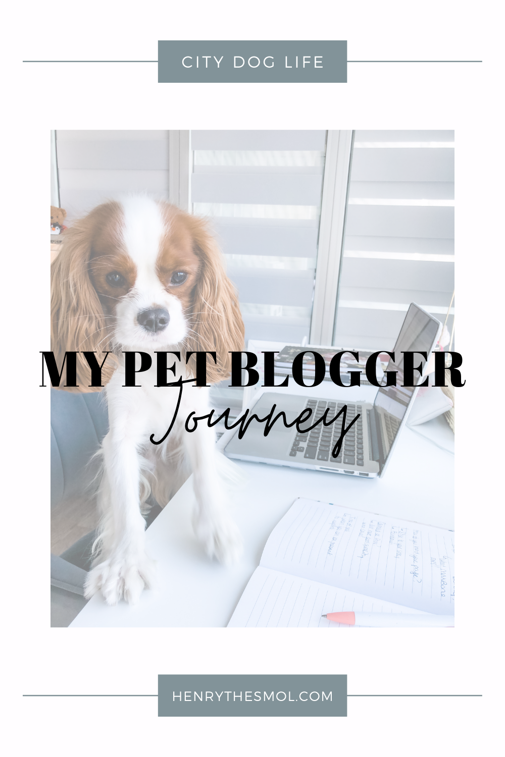 Pet Bloggers Journey 2021: My First Year As A Blogger