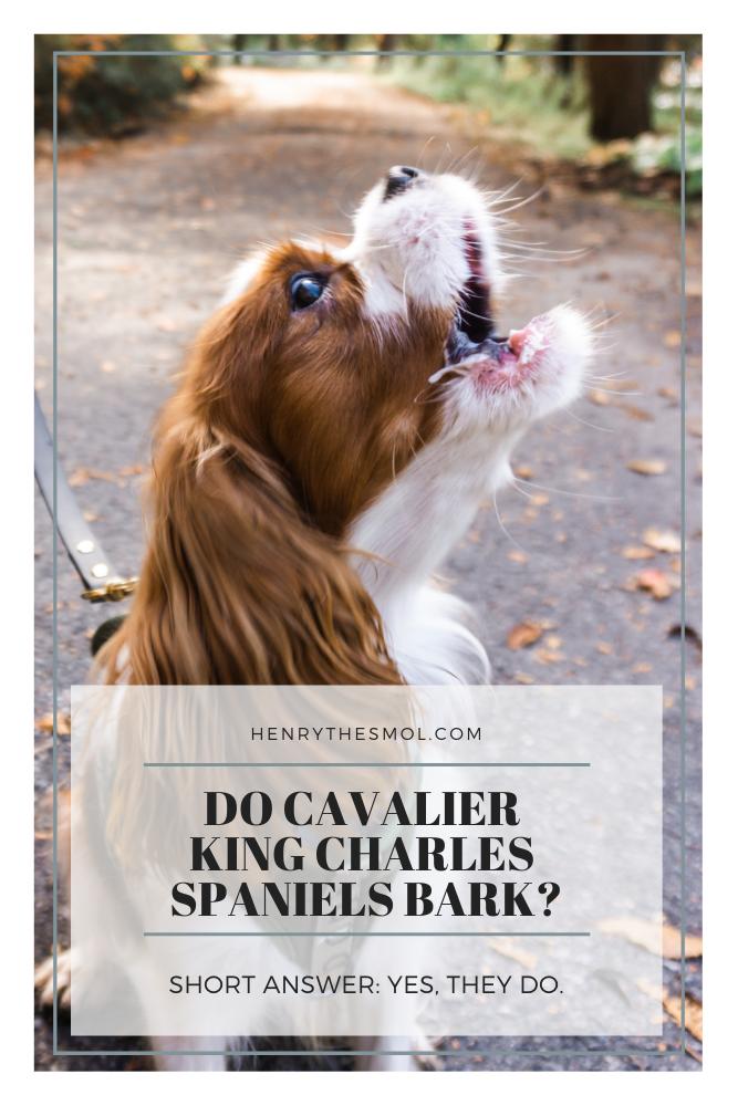 Anxious Barking Dog