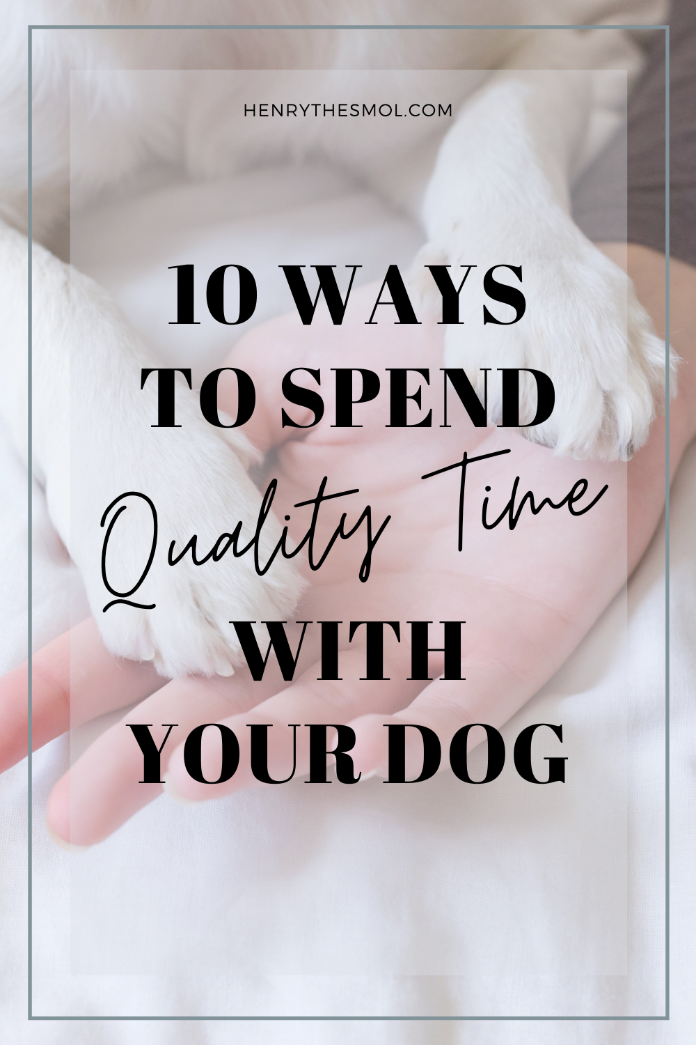 Spend Quality Time With Your Dog