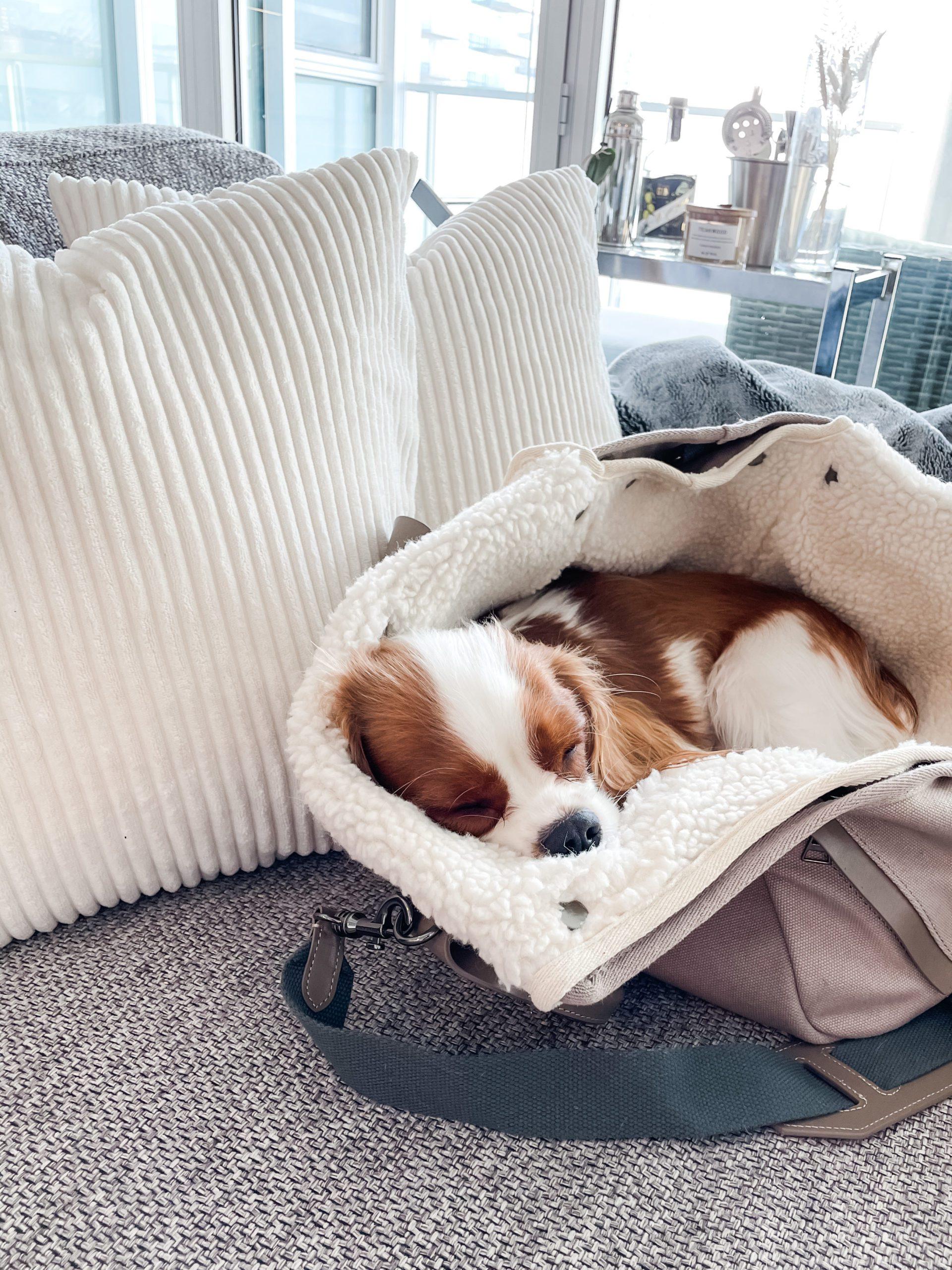 maxbone dog carrier