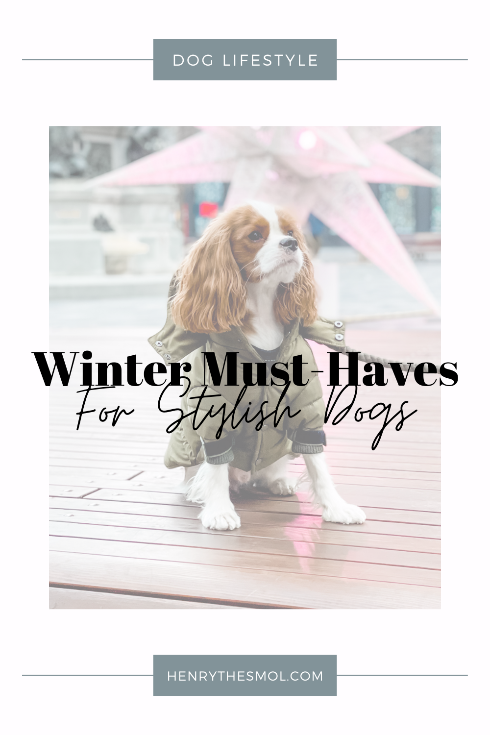 Winter Dog Essentials: Stay Warm In Cold Weather