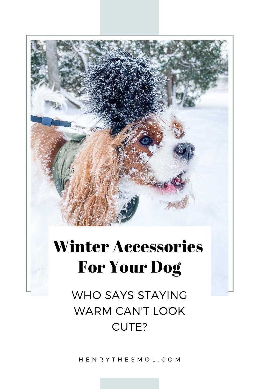 Winter Dog Essentials: Stay Warm In Cold Weather