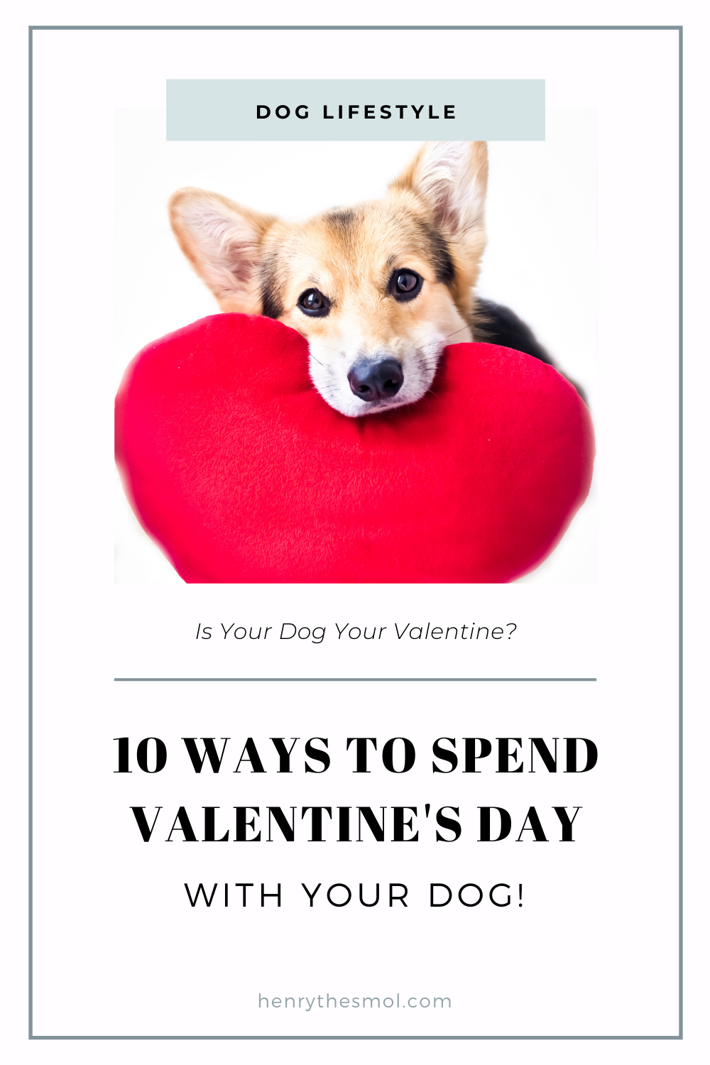 10 Ways To Spend Quality Time With Your Dog