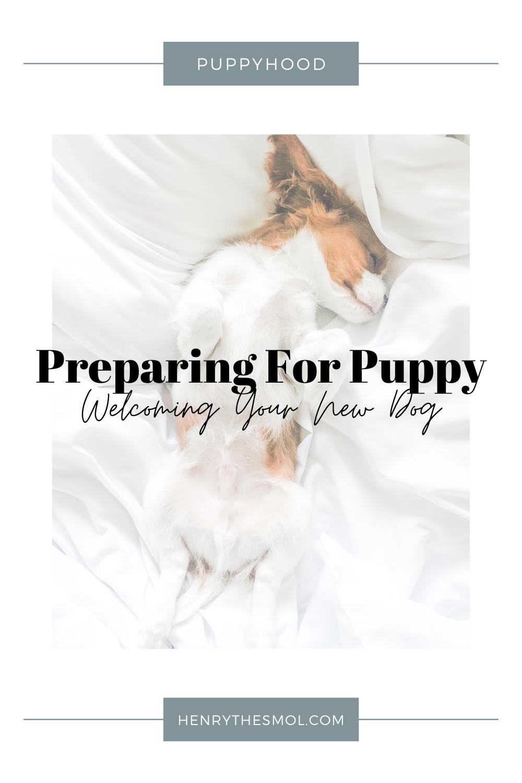 Preparing For Puppy