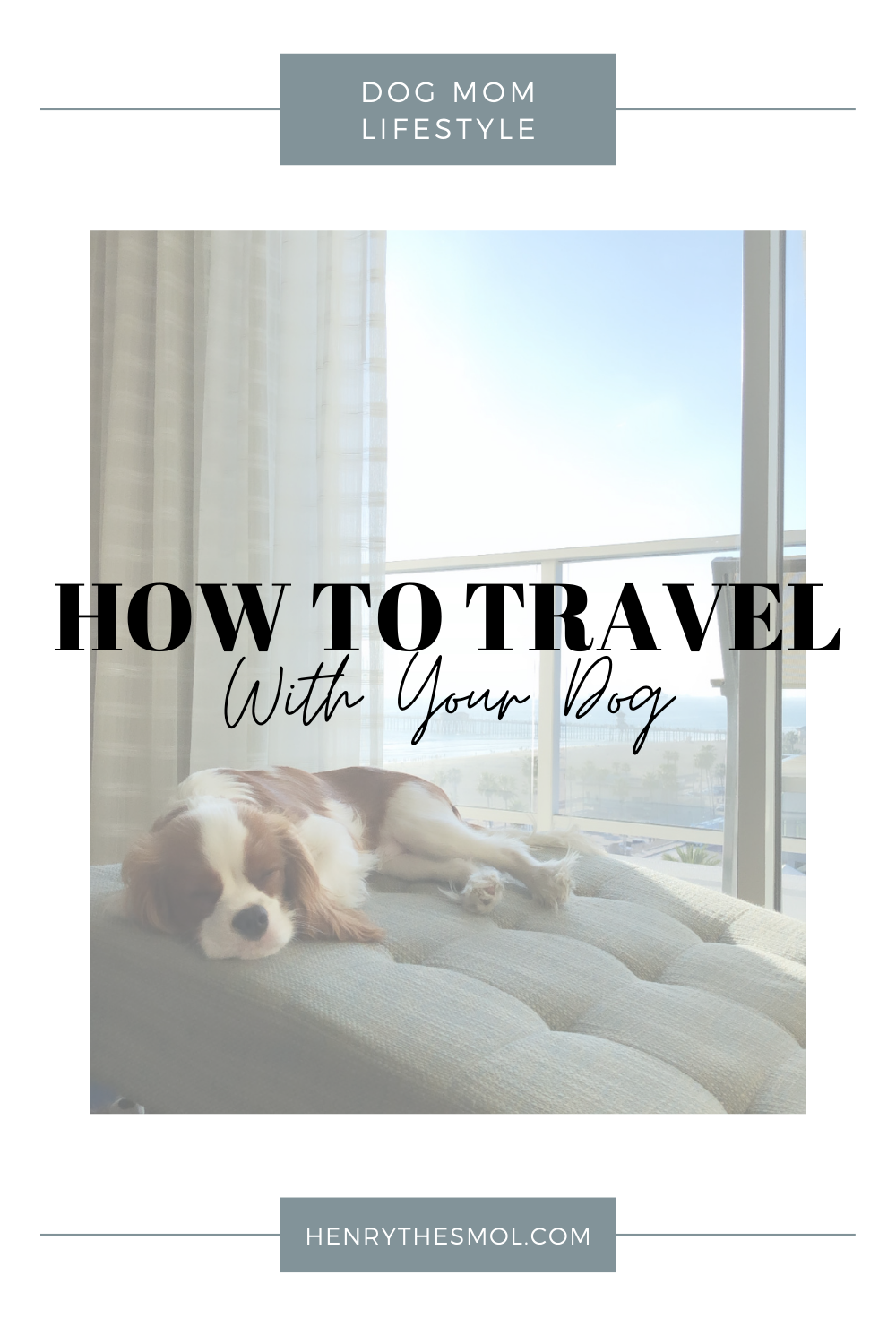 Tips for Traveling With Your Dog For The First Time
