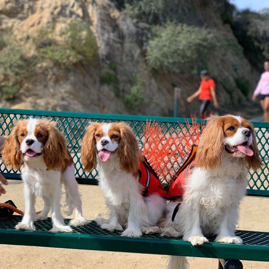 dog-friendly california