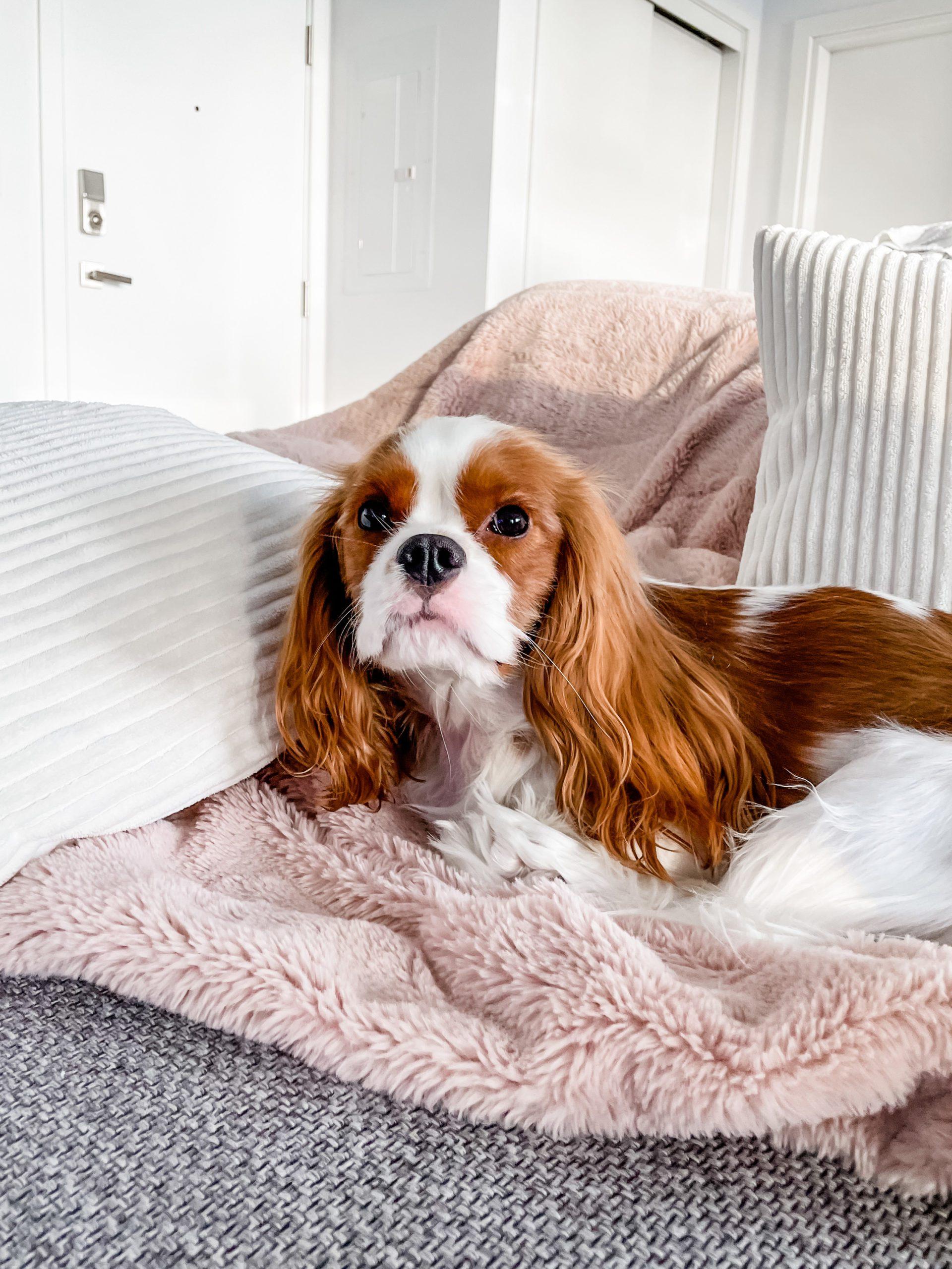 amazon dog products
