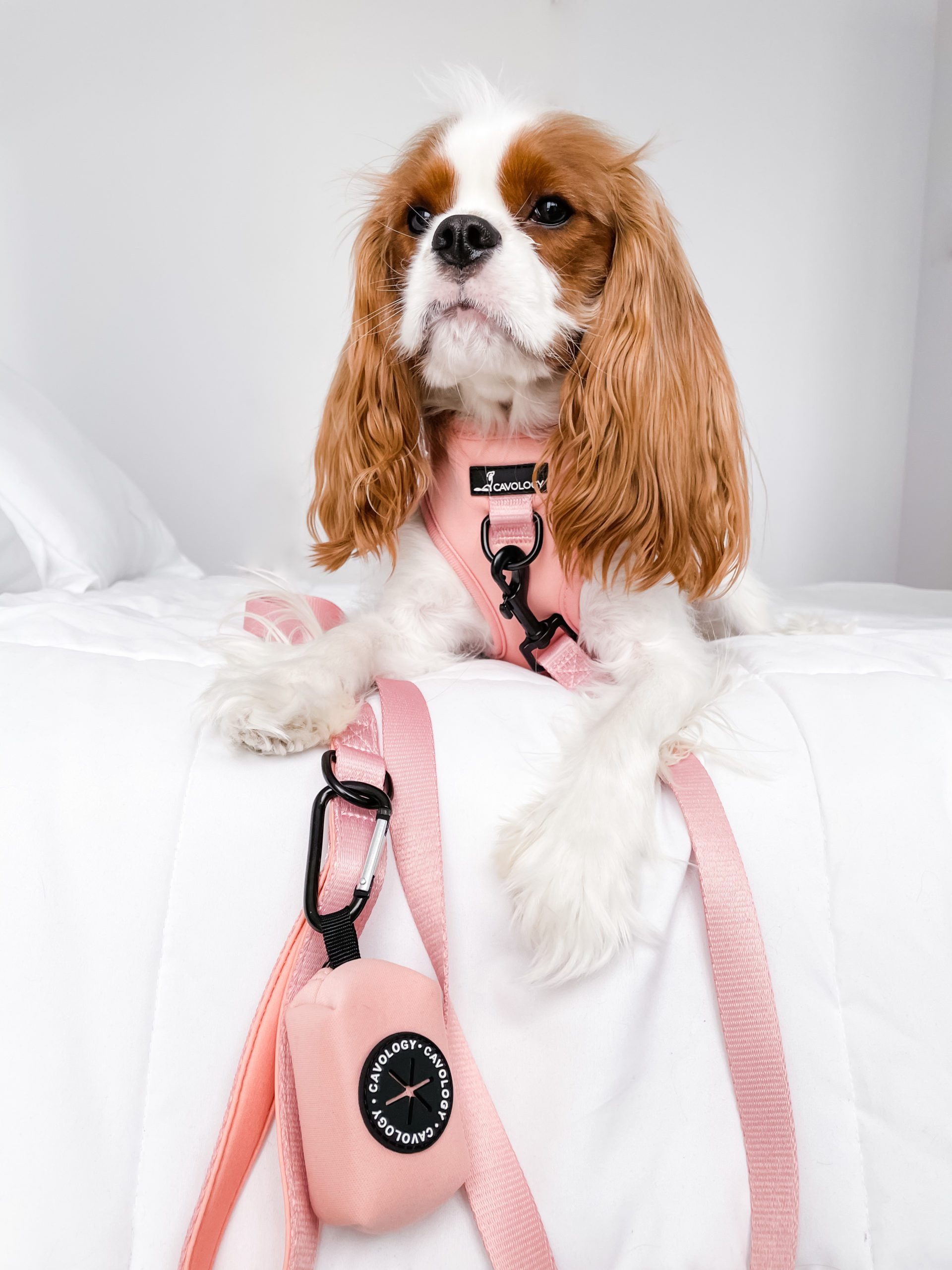 spring must-haves for stylish dogs