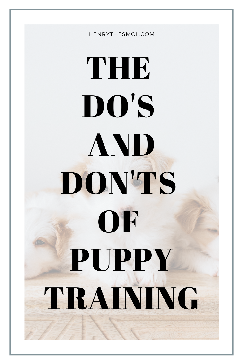 Dog Mom Talk: Puppy Training 101 with Ali Smith, Founder of Rebarkable