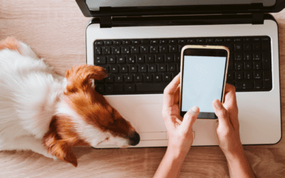 Instagram Insights Dog Momagers Need To Know