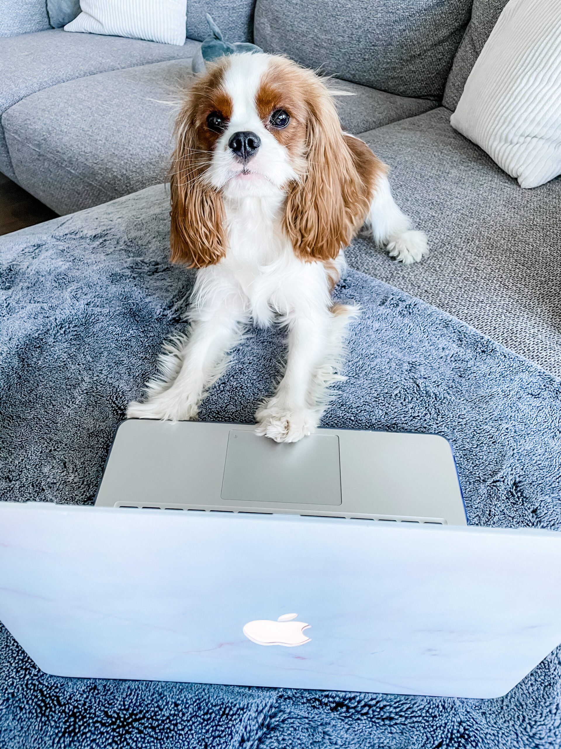 social media tools for dog-momagers