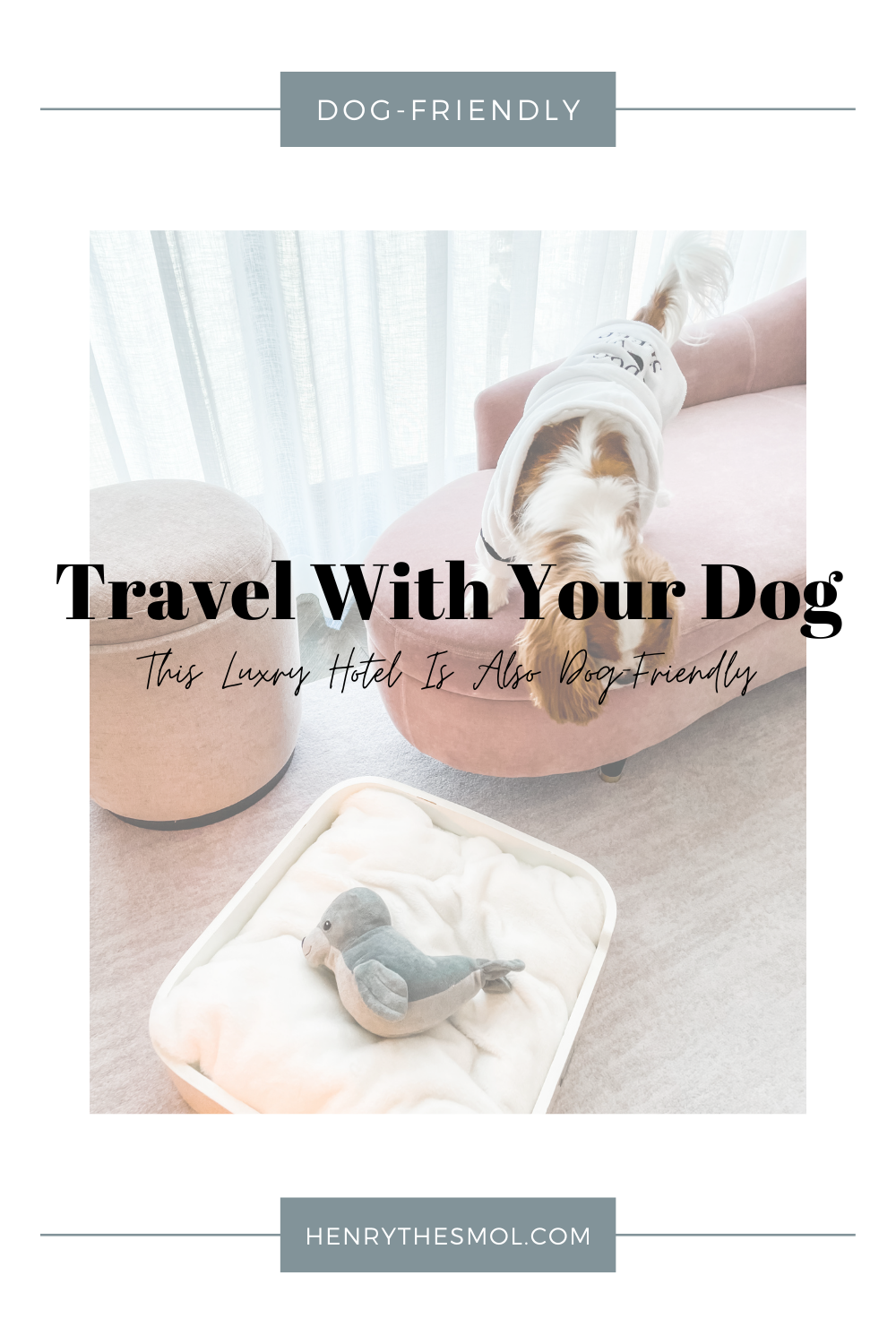 Our Dog-Friendly Staycation At The Four Seasons Hotel