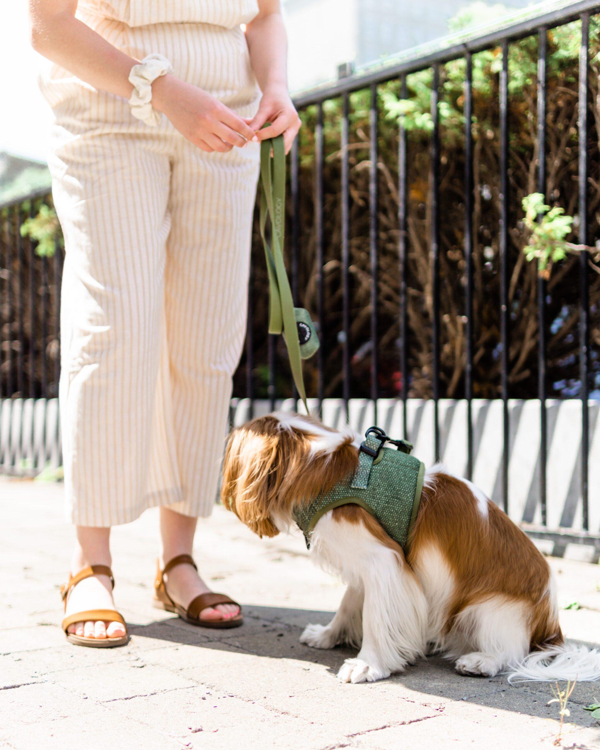 fall dog accessories matcha